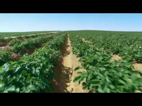 Potatoes from Egypt [video]
