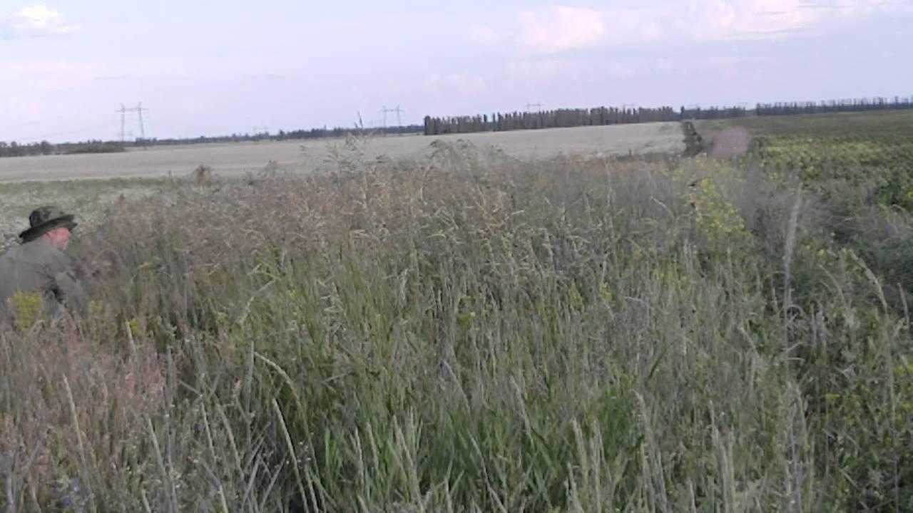 ловля полевого жаворонка паутинной сетью видео