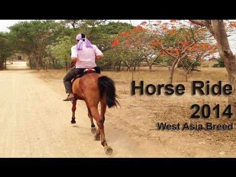 Horse Ride - West Asia Breed with No Musik