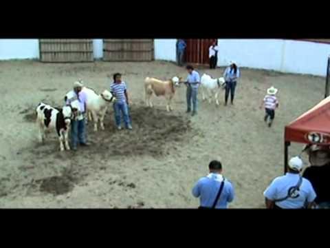 Izquicie Tv Pasca 120518 Expopasca 2 012 Exposición Bovina Ganado de Carne Jairo Melo Castrellón