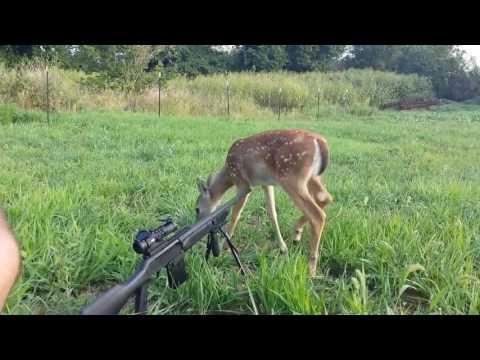Best Hunting/Gun Fails Compilation