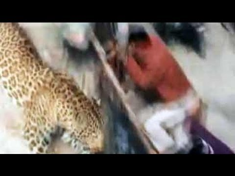 Leopard loose in Uttar Pradesh town, schools and colleges shut