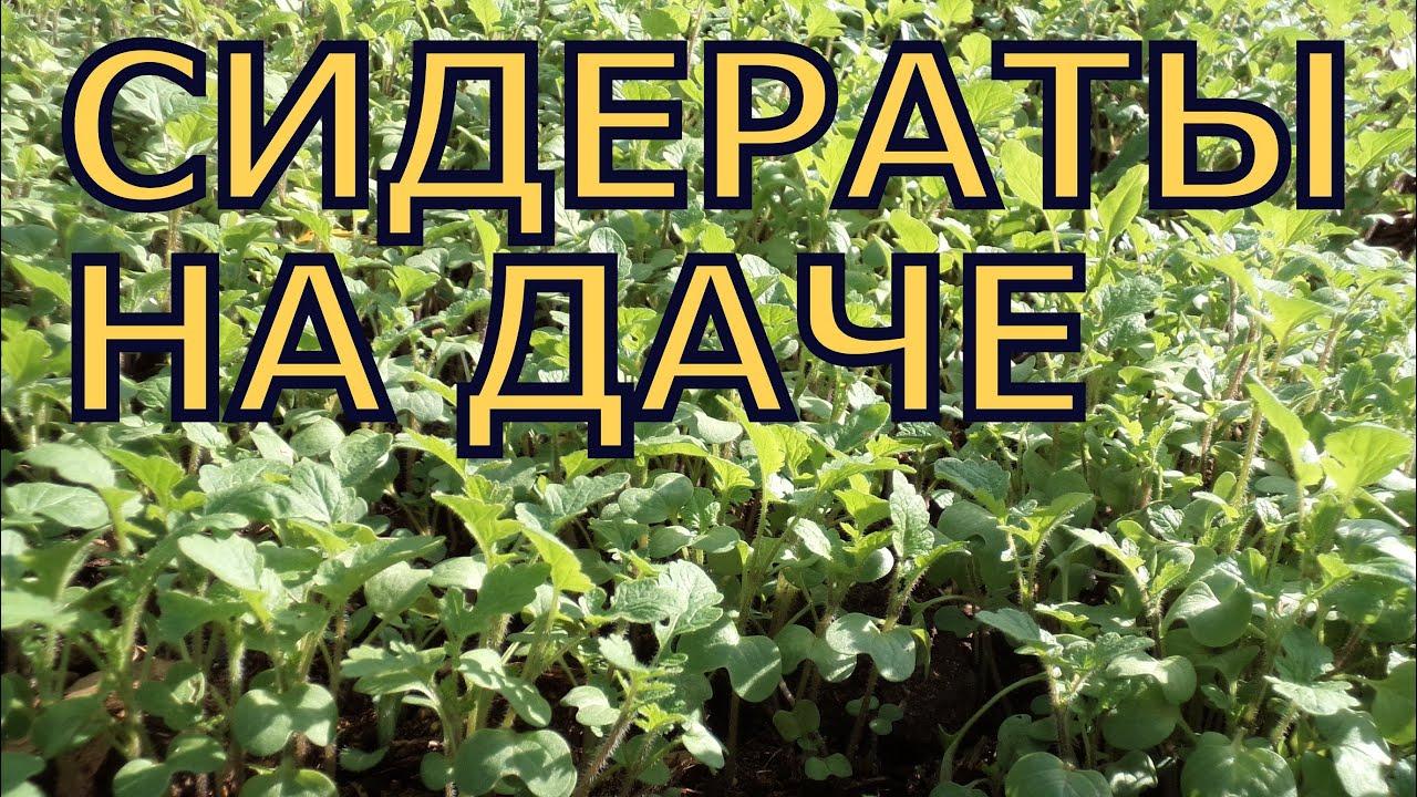 Сидераты как удобрения - когда сеять, какие лучше выбрать 77