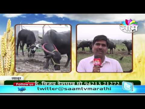Steps to Increase Milk Production in Animals - Vijay Deshmukh