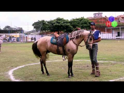 Lente Dinâmica - 1ª Exposição Especializada do Cavalo Mangalarga Marchador de Pirapetinga-MG