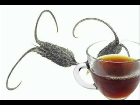 Devil's claw Tea Health Benefits