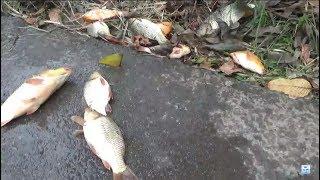 Câu cá giải trí - câu cá chép tốc độ luôn