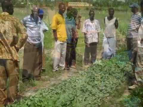Global Pollination Project-Ghana