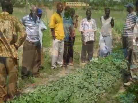 Global Pollination Project-Ghana