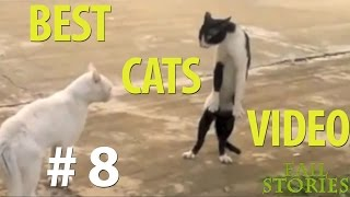 Best Funny Cats 25 January FAIL STORIES (funny videos, funny cats 2015)