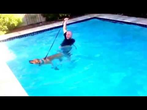 Thank you Scottsdale dog training ''k9katelynn'' on teaching our dog how to swim!! You can see more about Phoenix dog training @ k9katelynn.com