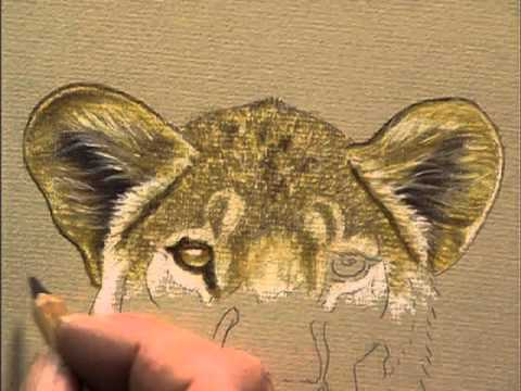 Draw &amp; Paint Wildlife with Pastel Pencils with Colin Bradley, Part 2