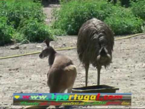 Animais selvagens Parque zoologico de Thoiry 1