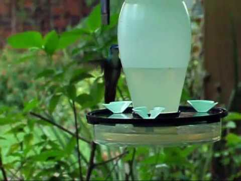 Alimentador para colibr es 05 youtube for Para desarrollar un parque ajardinado