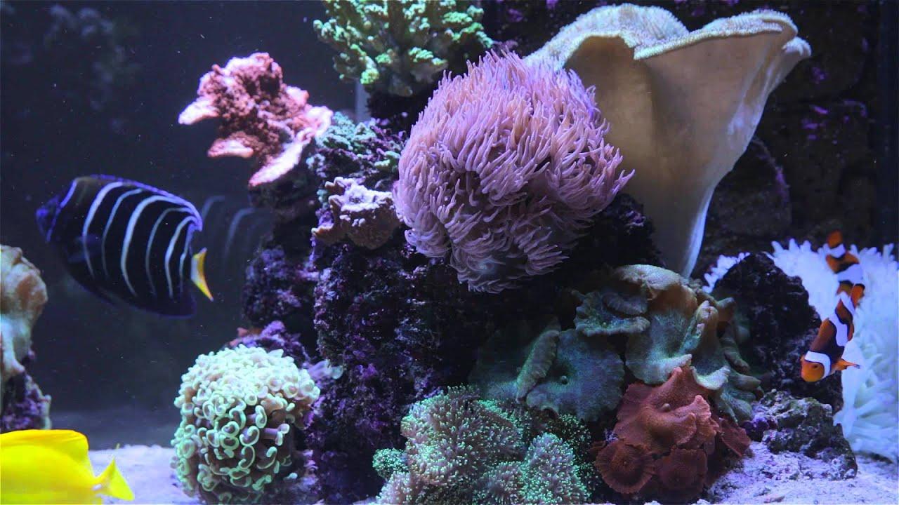 Finding nemo fish tank screensaver youtube for Finding nemo fish tank