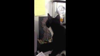 [Dyna-e Inc Kitten Needs a Lightload Towel] Video