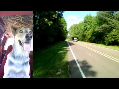 Dog's Reaction to 1/4 pass in Chevy S10 V8 4x4
