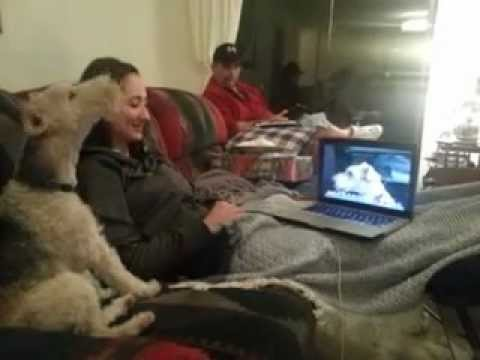 Two Dogs Having a Skype Chat