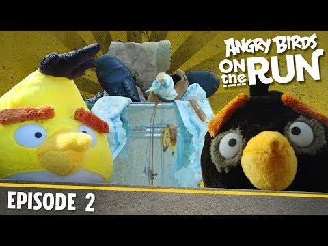Angry Birds- Na útěku - 2 - Lov jídla