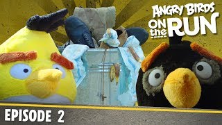 Angry Birds- Na úteku - 2 - Lov jedla