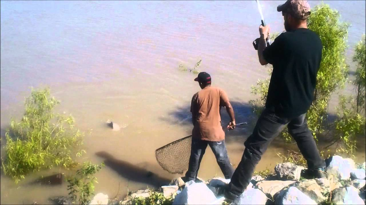 34 inch blue catfish mississippi river new orleans youtube for Mississippi out of state fishing license