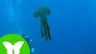 Conocimiento del medio: Esponjas, medusas y gusanos
