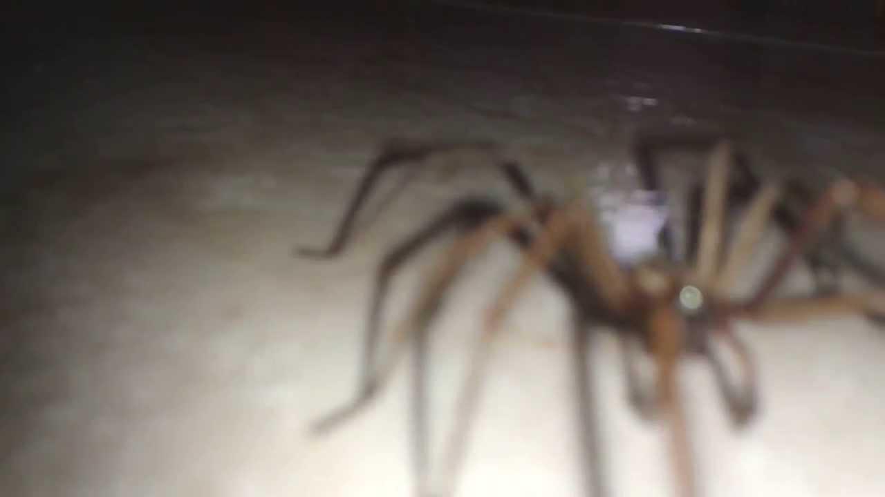 Une araign e qui fait peur youtube for Decoration qui fait peur