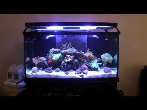 How to Reef Aquarium Maintenance Part 2 - Daily Tasks