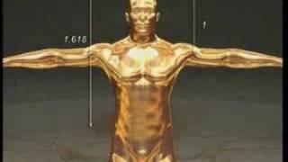 İnsan vücudu ve altın oran