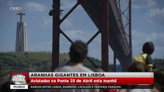 [Giant Spiders in Lisbon] Video