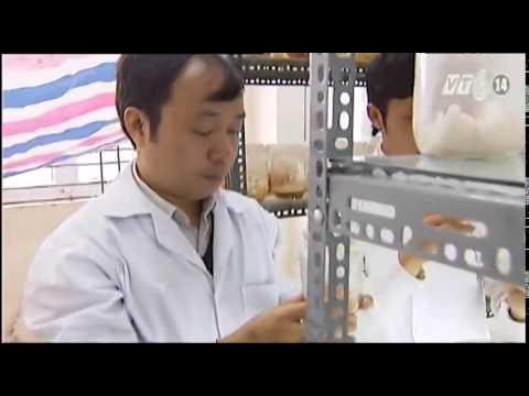 Đông Trùng Hạ Thảo Việt Nam chữa bệnh ung thư
