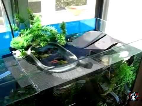 Acuario para tortugas parte 1 como darles de comer sin for Tortuguero casero