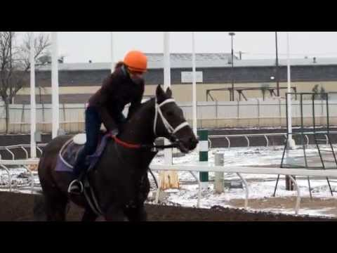 Exercise Rider & Jockey Training Program 2014