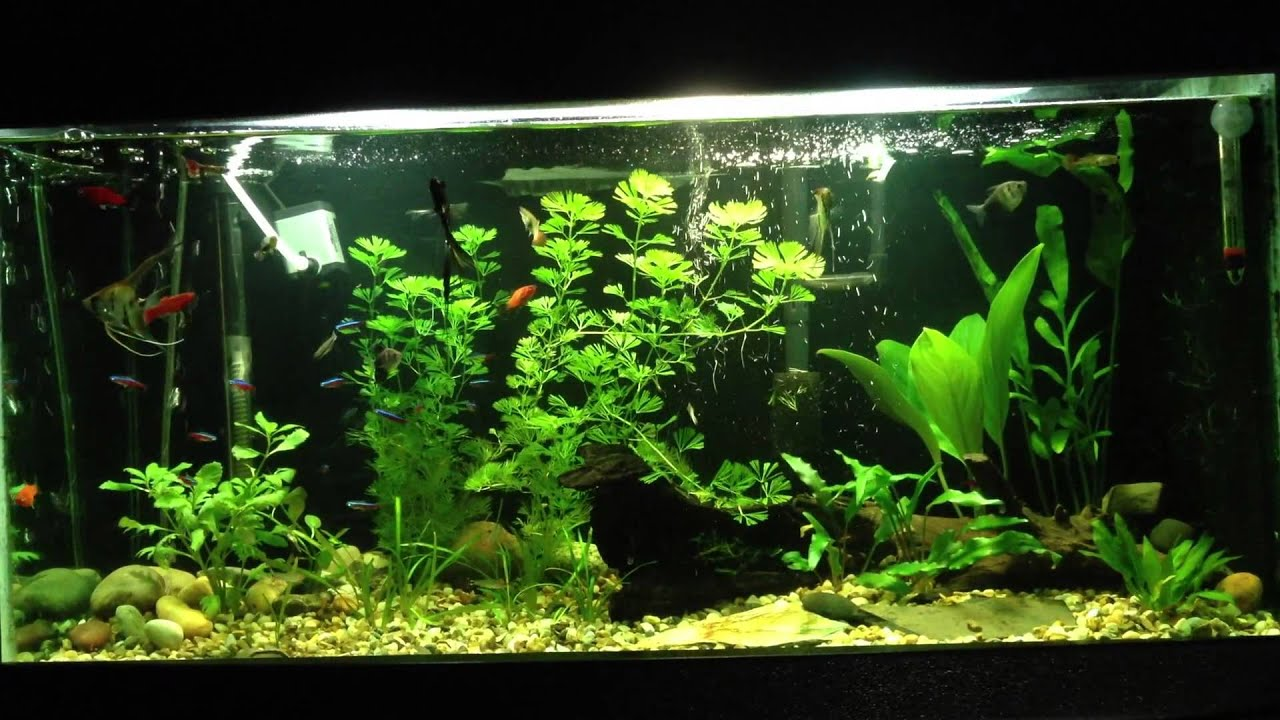 how to clean 20 gallon fish tank