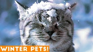 Funniest Winter Animal Video Compilation 2018 | Funny Pet Videos
