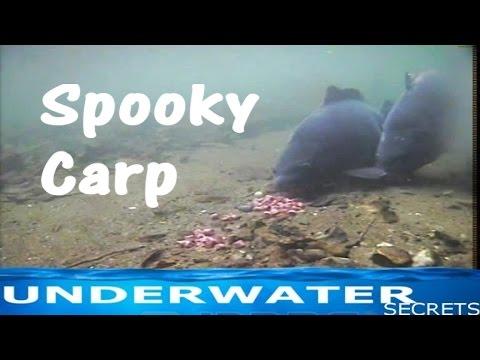 Lov kaprov, zábery natočené pod vodou