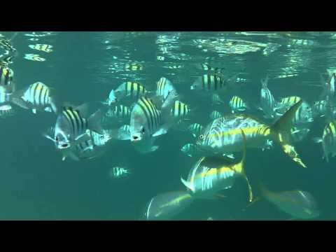Fish Feeding Swarm.MOV