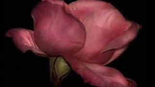 ʚïɞ YOUR LOVE Ennio Morricone & Dulce Pontes ♥ .•*