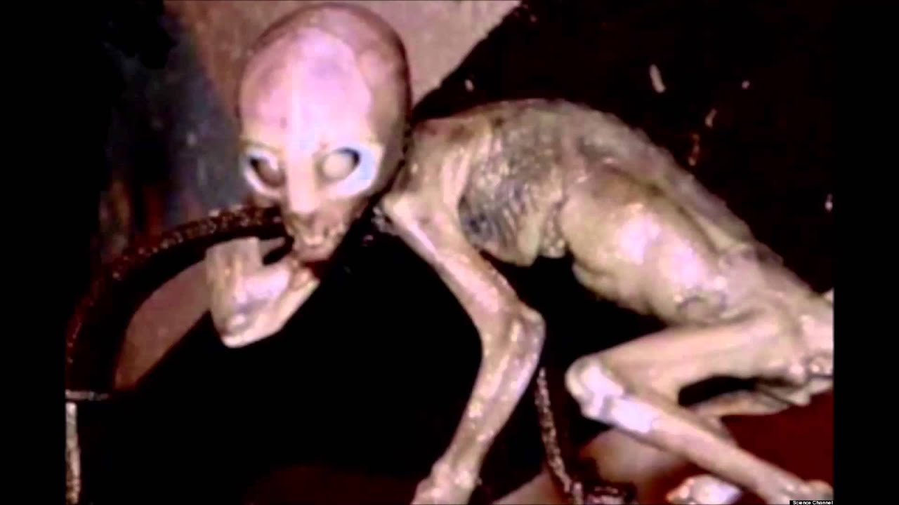 Real aliens on earth 2014 proof