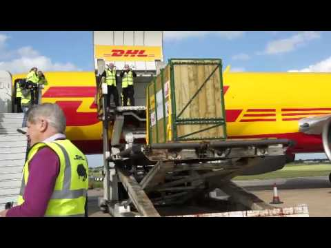 DHL transports endangered black rhinos back to the wild
