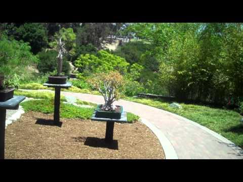 Bonsai in Balboa Park
