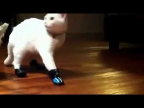 Cat wears shoes and forgets how to walk