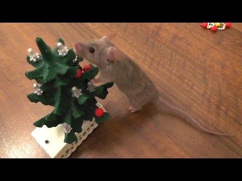 Świąteczny szok! Mysz ubiera choinkę!