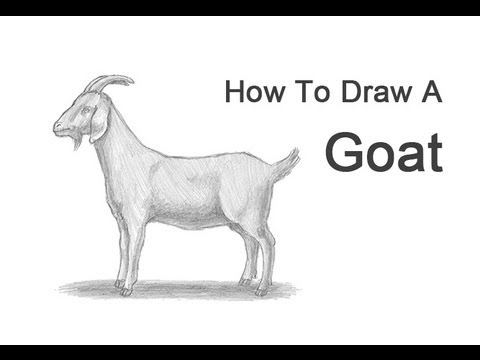 How to Draw a    Goat     YouTube