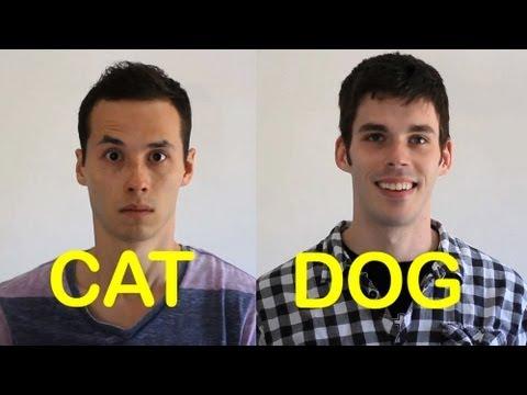 Cat-friend vs. Dog-friend