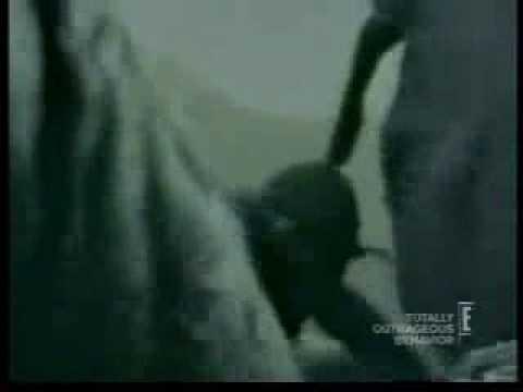 Man gets his head stuck up an elephants ass youtube - Elephant assis ...