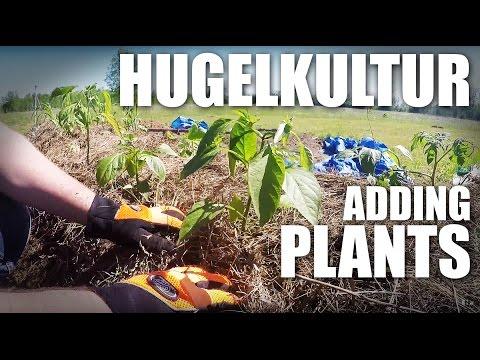 GGC - 59 - Homesteading: Planting Our Hugelkultur Vegetable Garden