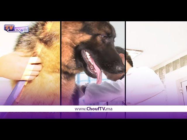برنامج أنا وصاحبي الحيوان..شوفو كيفاش كيتعالجوا الكلاب من الإسهال | أنا و صاحبي الحيوان