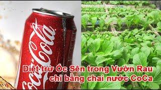 Diệt trừ Ốc Sên trong Vườn Rau chỉ bằng chai nước Coca