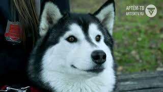 Собаки на охране общественного правопорядка